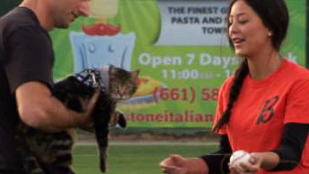 VIDEO: Cat Who Saved Boy Throws Out 1st Pitch