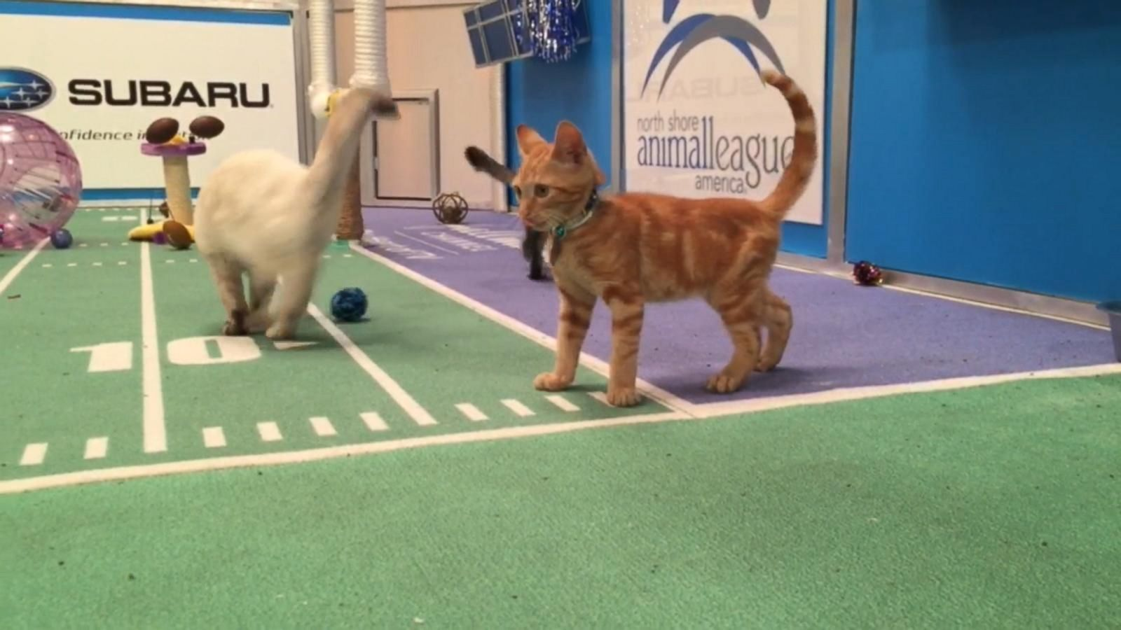 VIDEO: Meet the Starting Lineup for the 2017 Kitten Bowl