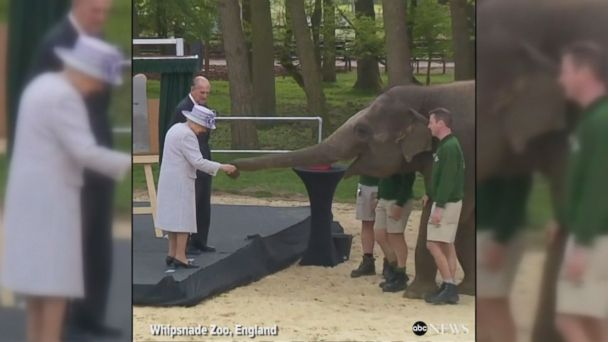 VIDEO: 7-year-old elephant Donna was fed by royalty at the opening of Whipsnade Zoo's Centre for Elephant Care.