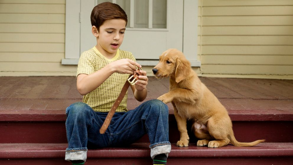 Does The Movie A Dog S Purpose Hurt Dogs