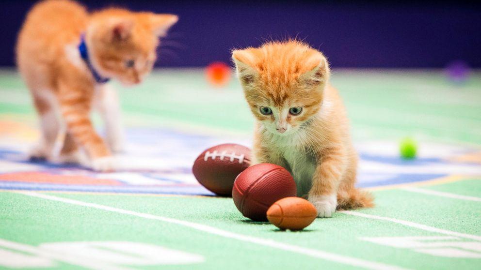 PHOTO Kittens playing  Kitten