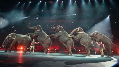 PHOTO: Elephants perform at the Ringling Bros. and Barnum & Bailey Circus, at the Amalie Arena in Tampa, Fla. in this Jan. 3, 2015 file photo.
