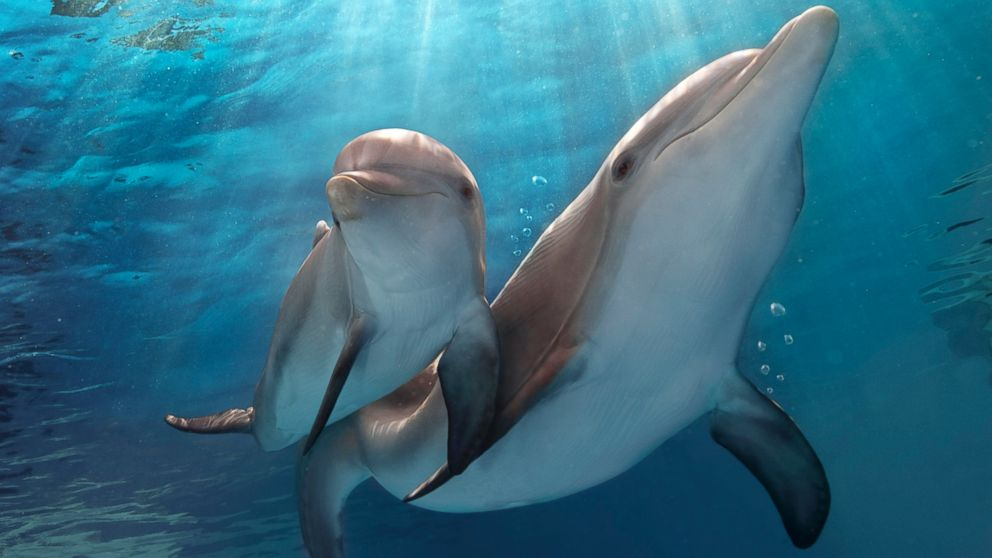dolphin tale 1