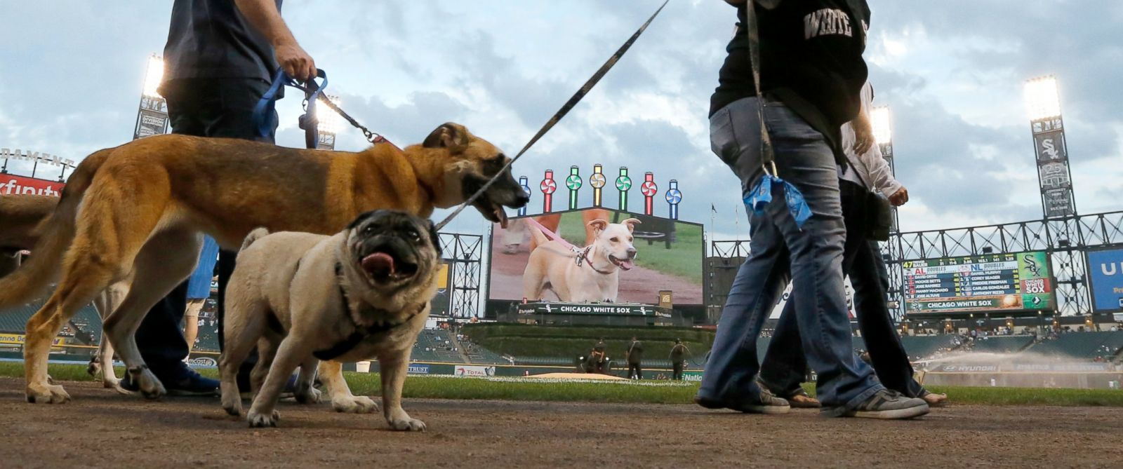 the baseball match between the panthers and white dogs Get the latest carolina panthers news, scores, stats, standings, rumors, and more from espn.