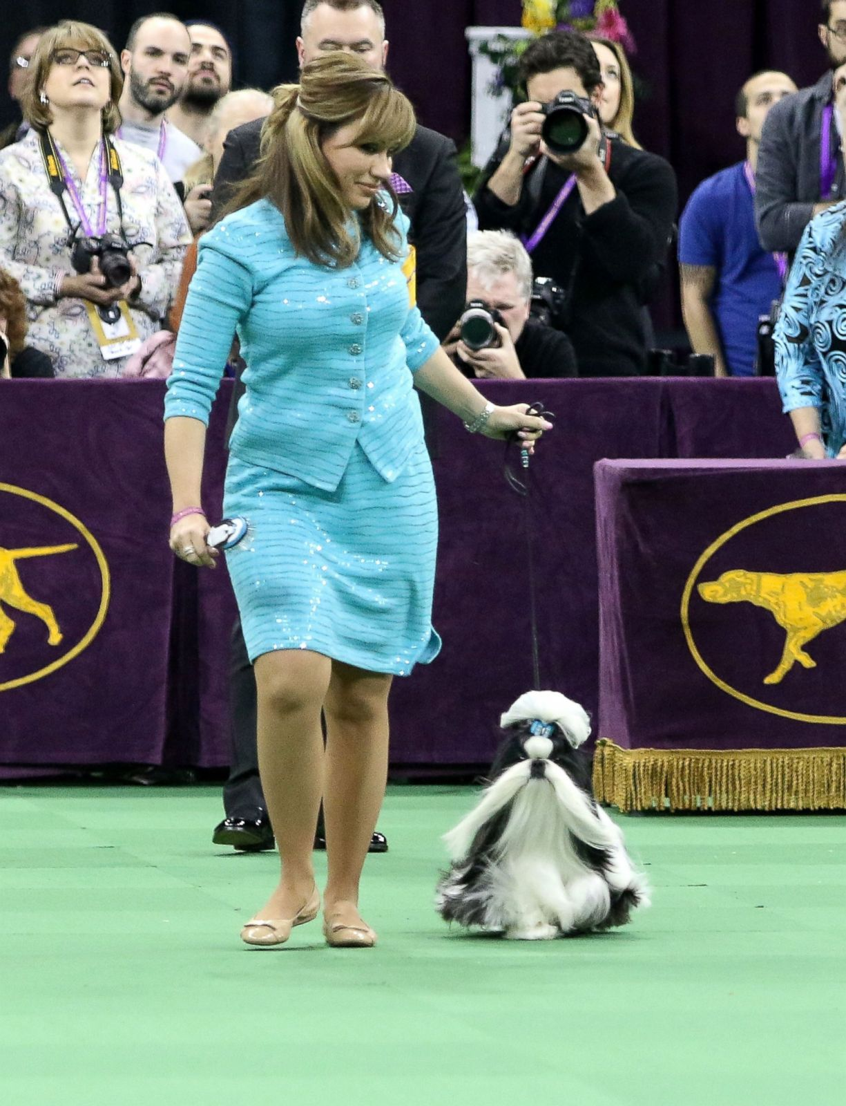 Watch Westminster Dog Show Online
