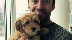 Meet Hugh Jackmans New (Nameless!) Puppy