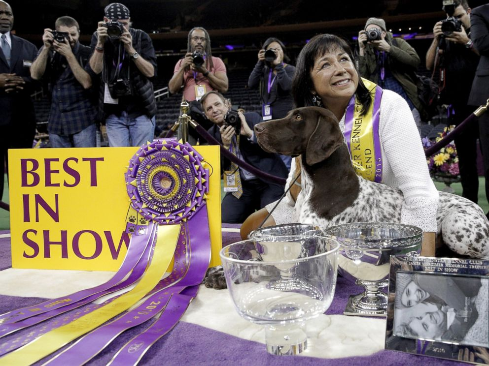 PHOTO: Handler Valerie Nunez Atkinson poses with CJ, a German Shorthaired Pointer from the Sporting Group, after they won Best in Show at the Westminster Kennel Club Dog show at Madison Square Garden in New York, Feb. 16, 2016.