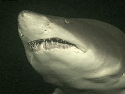VIDEO: Shark Week is Back!