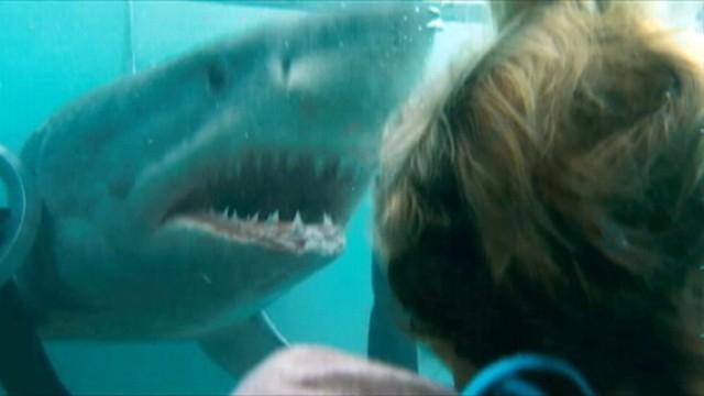 Watch Shark Tank TV Show - ABC.com