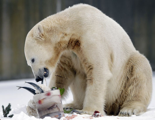 A Berlin zoo official says world-famous polar bear Knut has died. Bear keeper Heiner Kloes said that four-year-old Knut died Saturday afternoon March 19, 2011 while alone in his compound. He says the cause is not yet clear.