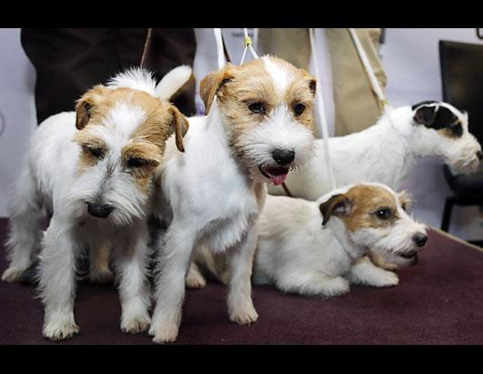 Dog Show Welcomes 6 New Breeds 