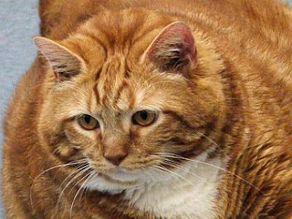 Photos: 'Skinny' the 41-Pound Cat Up for Adoption