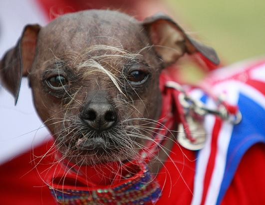 'World's Ugliest Dog'