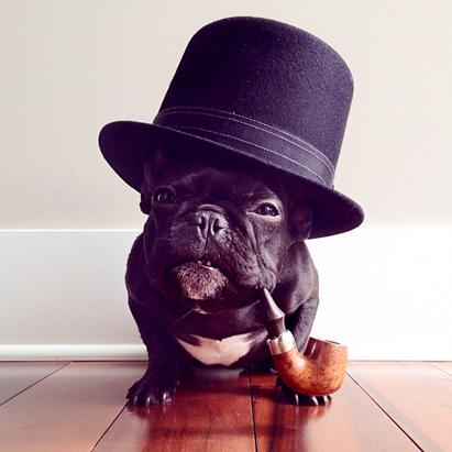 Trotter The Fashionable Pup