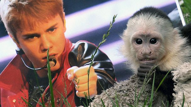 PHOTO: Mally the monkey with photo of Justin Bieber