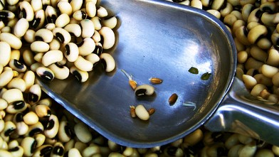 PHOTO: Black-eyed peas symbolize good luck for the new year.