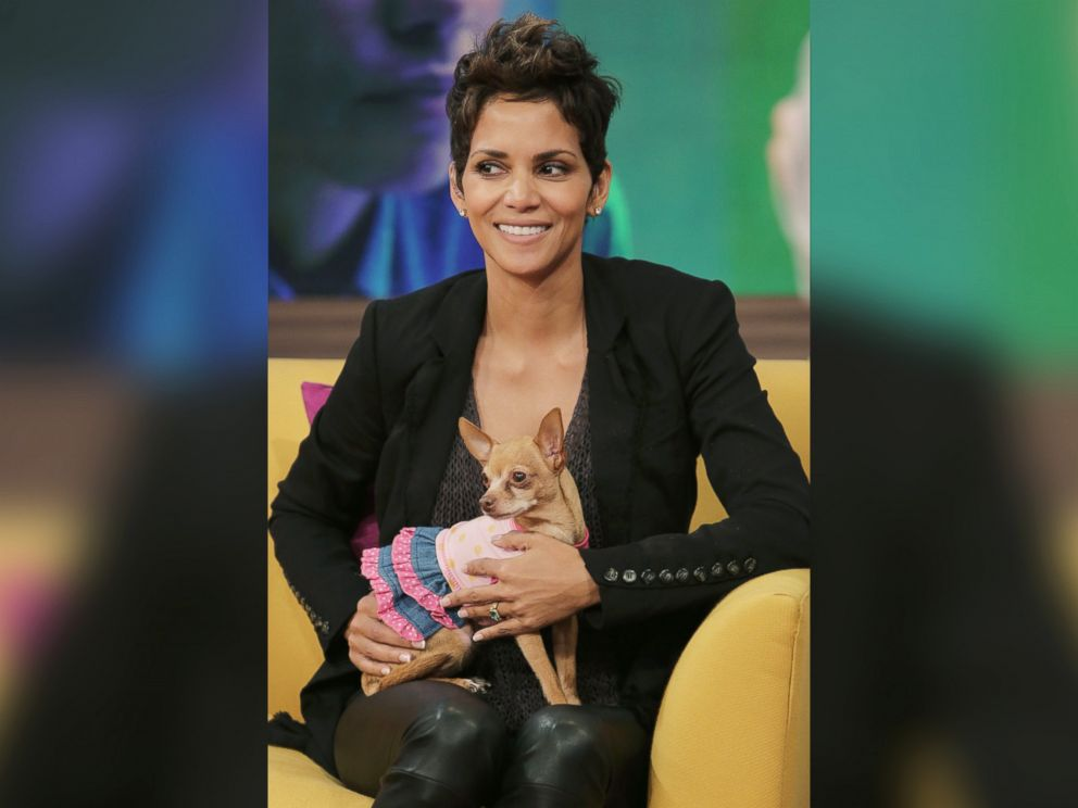 PHOTO: Halle Berry appears on Univisions Despierta America to promote her film The Call at Univision Headquarters on Feb. 27, 2013 in Miami, Fla.