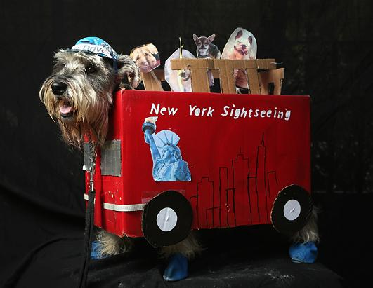 Dogs Dress Up for Halloween Parade