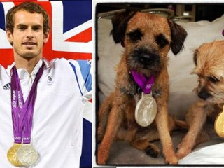 Photos: Andy Murray's Medals Go to the Dogs