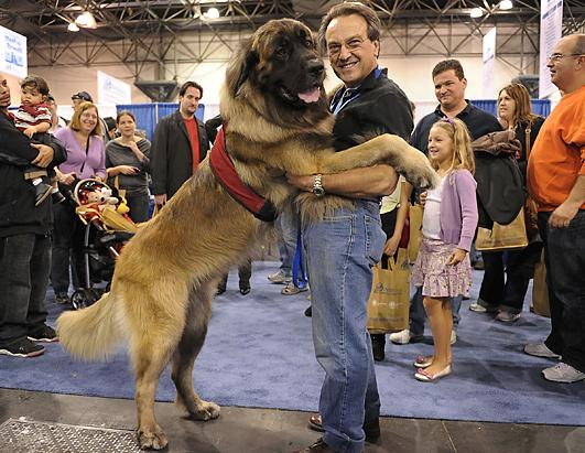 Dog Show Welcomes 6 New Breeds Picture Westminster Dog