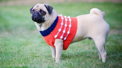 PHOTO: Pug in red sweater vest.