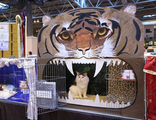 Britain's Supreme Cat Show