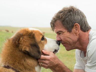 PHOTO: Dennis Quaid in A Dogs Purpose, 2017.