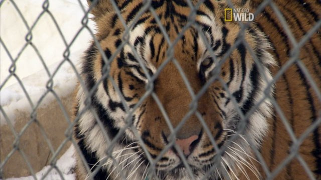 List of 11 Biggest Pros and Cons of Zoos