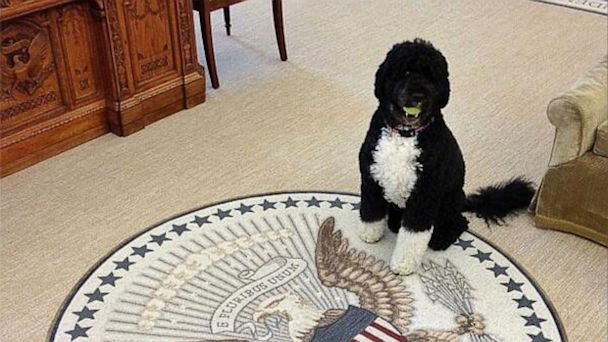 ht bo obama kb 130813 16x9 608 White House Tweets Mean Girls Joke About Bo The Dog