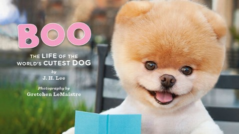 ht boo worlds cutest dog thg 130619 wblog Photos: 7 of the Biggest Celebrity Pets Around