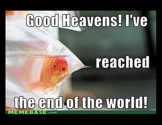 ht_end_of_world_meme_fish_2_ss_thg 121220_ssh funny meme's about the end of the world photos abc news