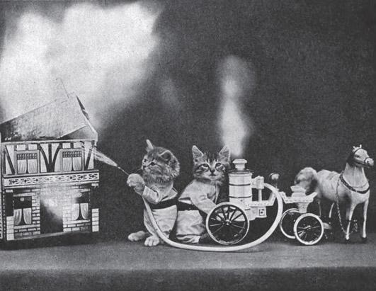 Novelty Cat Images From The Turn of the Century