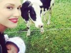 Gwen Stefani Takes Baby Apollo to Meet a Cow