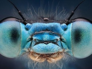 Photos: Stunning Images of Insects Reveal Amazing Colors