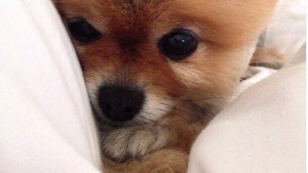 ht lea michele puppy kb 131015 16x9 608 Meet Lea Micheles New Little Love