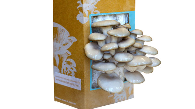 PHOTO:The &quot;Back to the Roots&quot; mushroom growing kit is shown here.