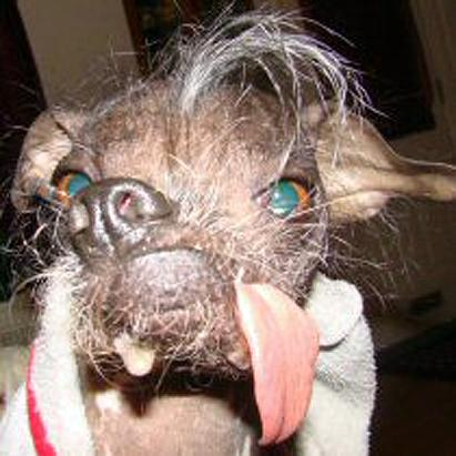World s Ugliest Dog Co...