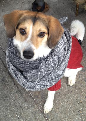 Pets Bundle Up For Winter