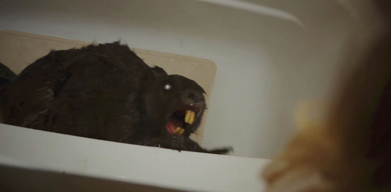 "PHOTO: A scene from the trailer of the upcoming film, ""Zombeavers""."