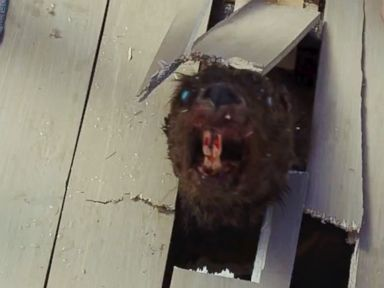 PHOTO: A scene from the trailer of the upcoming film, Zombeavers.
