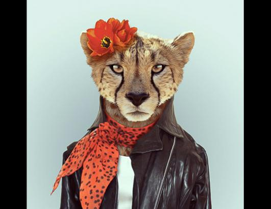 Zoo animals in clothes
