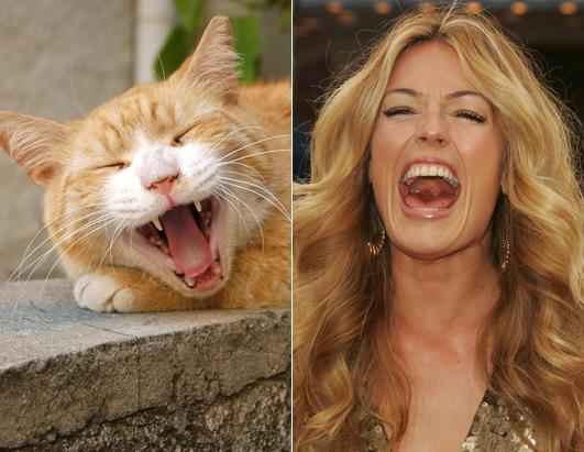 Cats as Celebrities