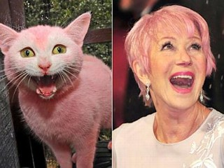 Photos: Celebrity Cat Lookalikes