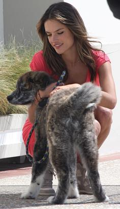 Alessandra Plays With Puppy