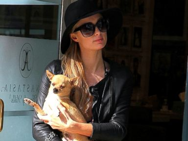 Photos: Meet Paris Hilton's Dog, Peter Pan