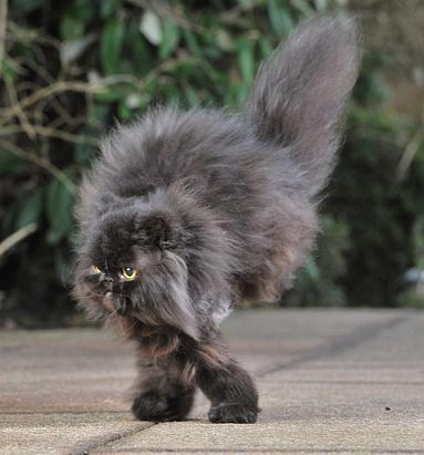 Cat Walks with Two Legs