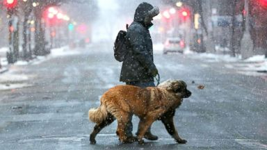 'PHOTO: A man walks his dog through the empty streets of Boston as the snow begins to fall during a massive winter storm, Jan. 4, 2018, in Boston.' from the web at 'http://a.abcnews.com/images/Entertainment/walking-dog-snow-gty-mem-180105_16x9t_384.jpg'