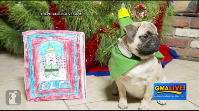 VIDEO: Little Boy Narrates Elf Remake Staring Pugs