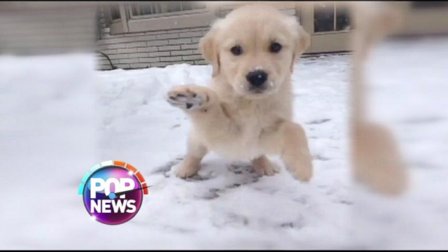 Cute Puppies Playing in Snow Cute Dog Video Puppy Plays in