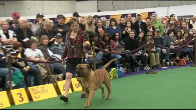 VIDEO: Find out which pups will be allowed to compete in this years show.